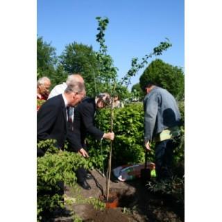 2007 Apollo heeft een Pruimenboom